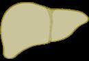 hlthy-lvr